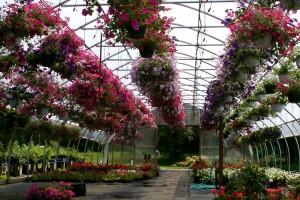 Bloom Area