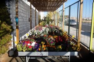 Flowers Outside Area
