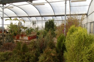 Garden Shrubs Area