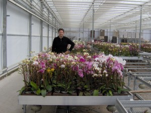 Orchids Production Area