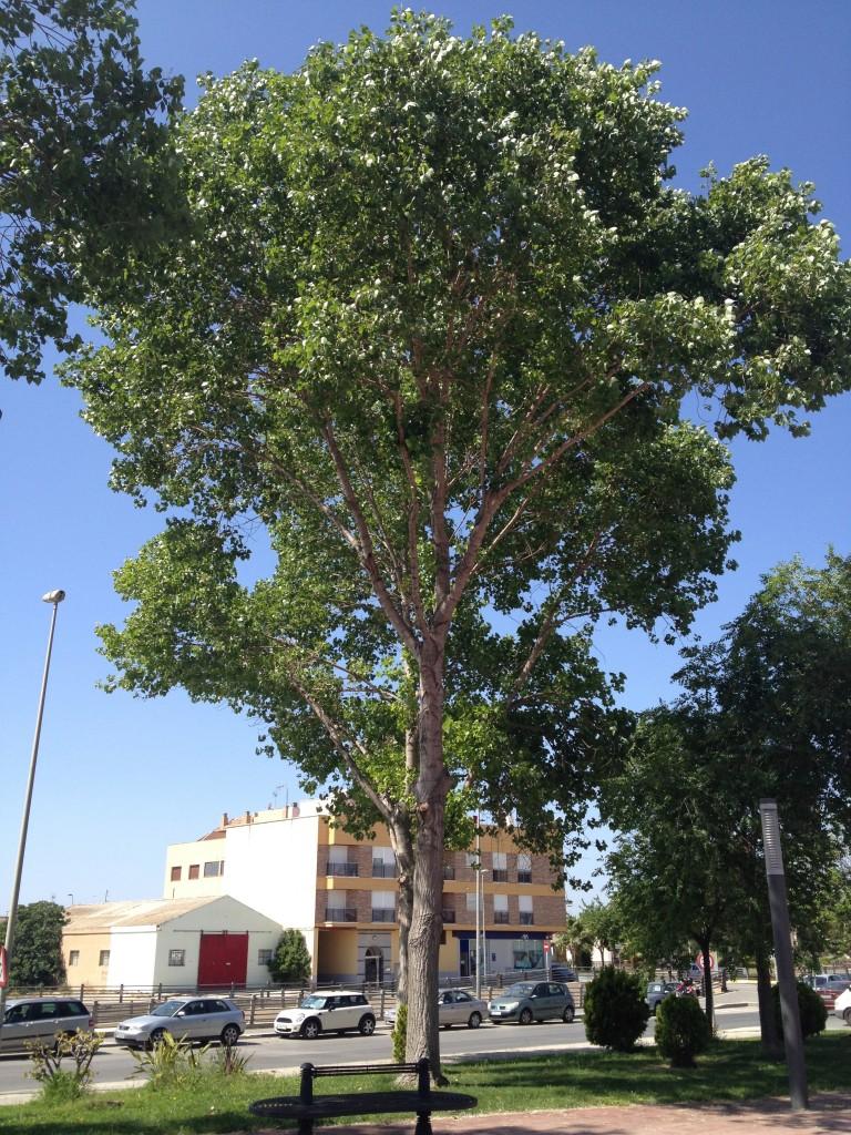 Parque Nelson Mandela, Murcia