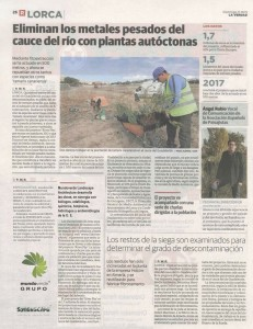 RiverPhy Project, of the European Union we are testing new procedures of phytoextraction of heavy metals in the  Guadalentín riverbed